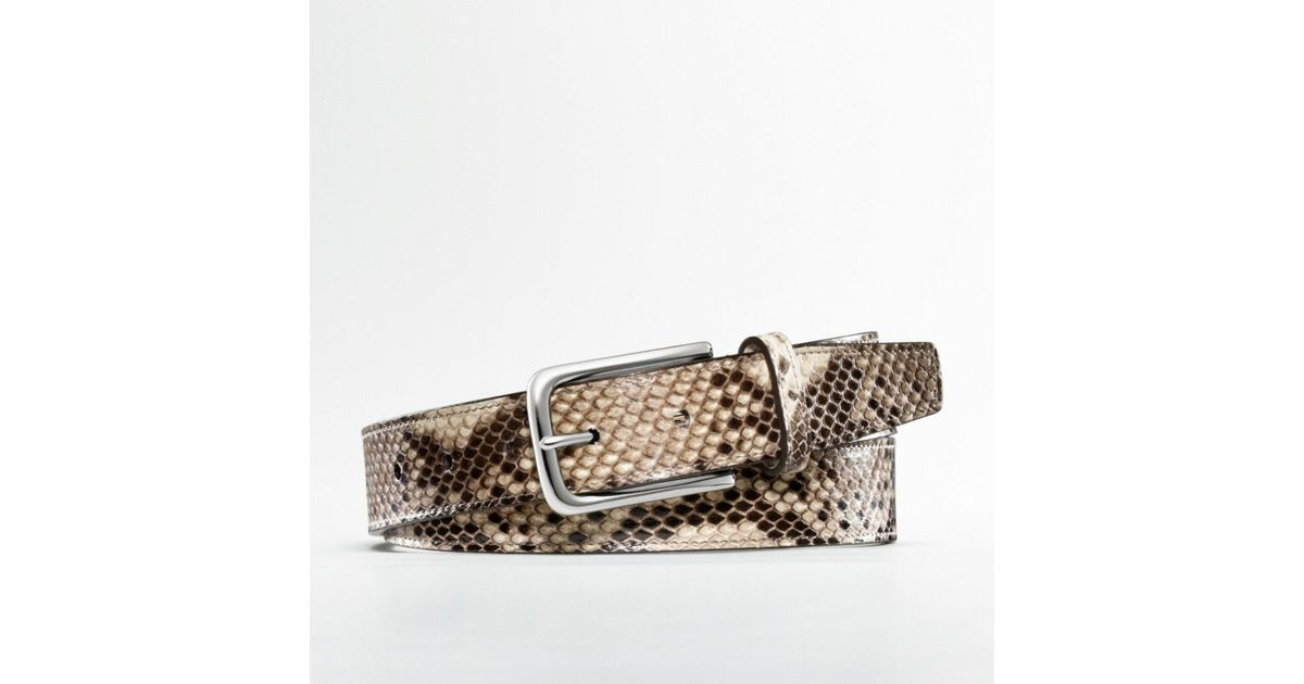 Coach Python Belt in Silver for Men (silver/natural) | Lyst