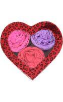 Hanky Panky 3 Original Rise Thongs in Heart-shaped Box - Lyst