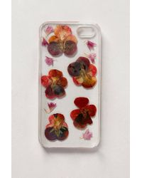 Anthropologie | Multicolor Pressed Violas Iphone 5 Case | Lyst