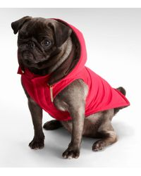 Tory Burch | Pink Nylon Puffer Dog Coat | Lyst