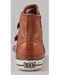 Ash - Brown Virgin Bis Buckle Sneakers - Lyst