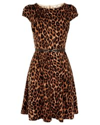Oasis | Oasis Animal Fitandflare Dress Multi | Lyst