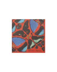 Alexander McQueen - Blue Psalm 113 Skull Butterfly Scarf - Lyst