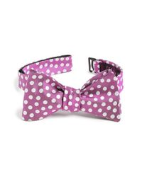 Ted Baker | Pink 'tosses Dots Ii' Silk Bow Tie for Men | Lyst