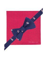 Tommy Hilfiger - Blue Stripe Bow Tie Pocket Square Set for Men - Lyst