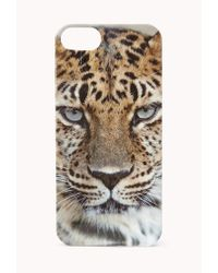 Forever 21 - Black Wild Tiger Phone Case - Lyst
