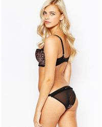 Scantilly | Brown Pounce Brief | Lyst