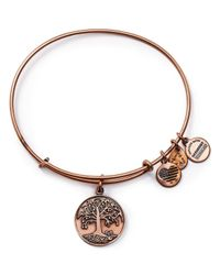 ALEX AND ANI | Pink Tree Of Life Rose Gold Tone Wire Bangle - 100% Bloomingdale's Exclusive | Lyst