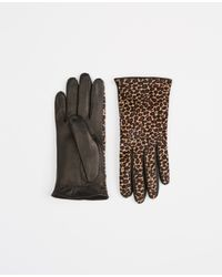 Ann Taylor | Black Animal Print Haircalf Leather Gloves | Lyst