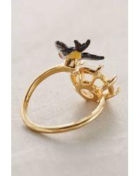 Les Nereides - Black Avifauna Ring - Lyst