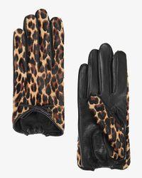 Agnelle - Multicolor Josie Calf Hair/leather Cheetah Print Gloves - Lyst