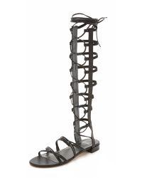 Stuart Weitzman - Black Sparta Gladiator Sandals - Lyst