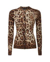 Dolce & Gabbana   Brown Leopard Print Cardigan   Lyst