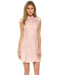 Lover   Pink Warrior Lace Mini Dress   Lyst