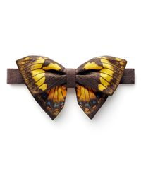 One Wolf | Brown Papilio Homerus Ulster Bow Tie for Men | Lyst