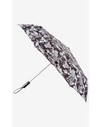 Express Snake Print Umbrella