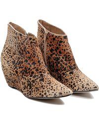 Matisse Nugent Leopard Booties - Lyst