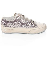 Candice Cooper Rock Biss Snake Print Trainers - Lyst