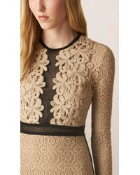 Burberry | Lace and Mesh Cotton-Blend Dress | Lyst