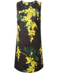 Dolce & Gabbana Acacia Print Brocade Dress - Lyst