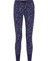 Zoe Karssen Leopard Print Cotton Blend Track Pants - Lyst