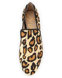 Sam Edelman Kalinda Leopardprint Calf Hair Loafer - Lyst