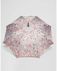 Cath Kidston - Kensington 2 British Birds Grey Umbrella - Lyst
