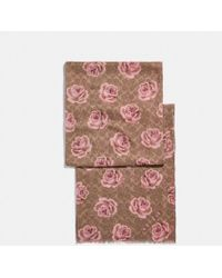 COACH - Signature Rose Oblong - Lyst