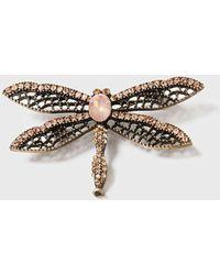 Dorothy Perkins - Rhinestone Dragonfly Broach - Lyst