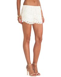Twelfth Street Cynthia Vincent - Lace Shorts - Lyst