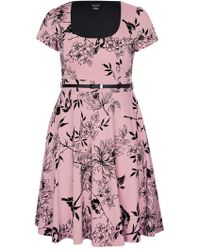 City Chic - Blush Birdy Flock Fit And Flare Dress - Lyst