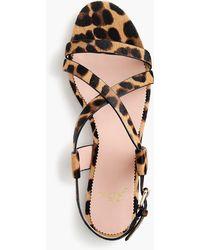 19c02b5487e J.Crew - Strappy Buckled Cora Sandals In Leopard Calf Hair - Lyst
