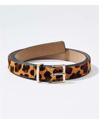 LOFT - Leopard Print Hair Calf Refined Belt - Lyst