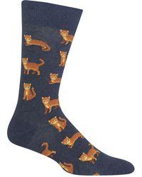 Hot Sox - Cat Socks - Lyst