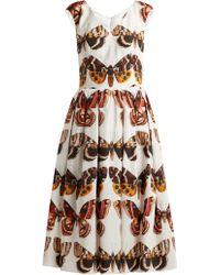 Dolce & Gabbana - Butterfly Print Pleated Cotton Dress - Lyst