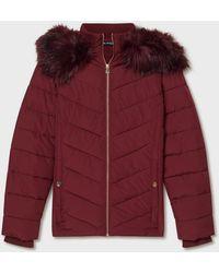 Miss Selfridge - Burgundy Hooded Puffer Coat - Lyst