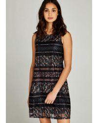Apricot Spitzenkleid »Ditsy Kaleidoscope Lace Dress« in bedruckter Spitze