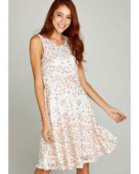 Apricot Spitzenkleid »Ditsy Printed Lace Skater Dress« mit feiner Spitze