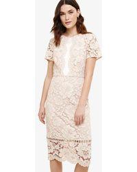 Phase Eight - Darena Dress - Lyst