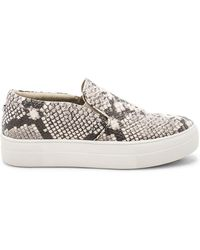 Steve Madden - Gills Trainers - Lyst