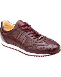 Belvedere - Parker Sneaker - Lyst