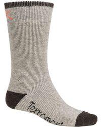Terramar - Sub-zero Socks - Lyst
