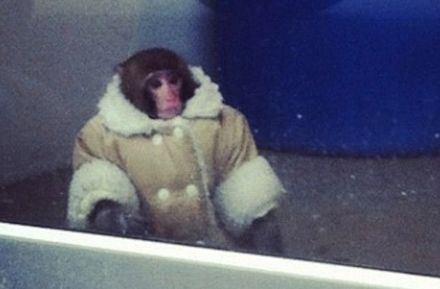How to Channel Your Inner Ikea Monkey