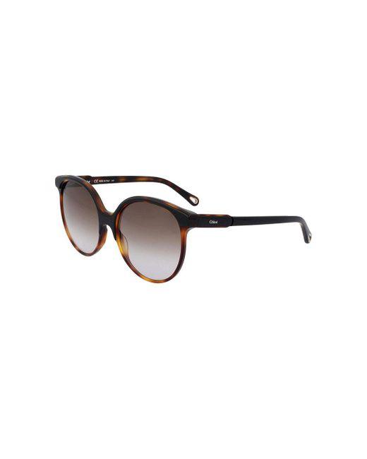 8d60920935 chloe--Chloe-Ce733s-Women-Sunglasses.jpeg