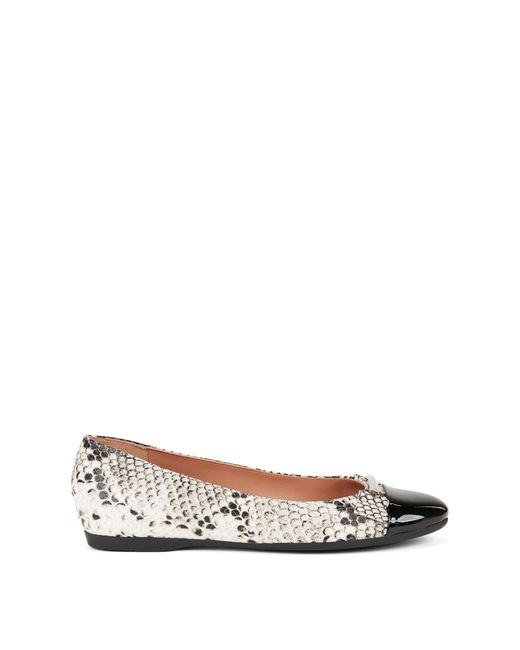 BOSS | Multicolor Snakeprint Leather Ballerina Pumps With Patent Toe | Lyst