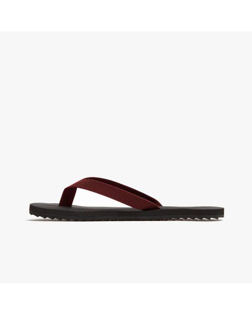 James Perse | Brown Antes Grosgrain Flip-flop - Womens | Lyst
