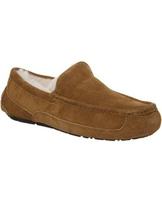 Ugg Men S Brown Ascot Slipper