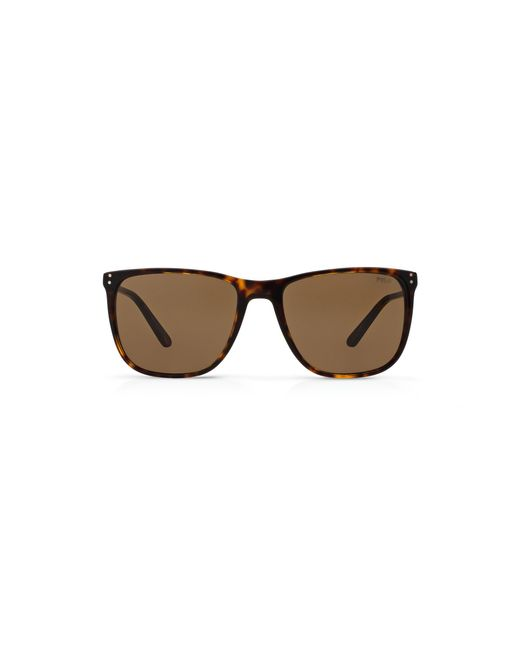 Polo Ralph Lauren | Brown Wayfarer Sunglasses for Men | Lyst