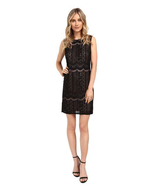 Adrianna Papell - Striped Lace Shift Dress (black/pale Pink) Women's Dress - Lyst